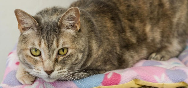 Sun Cities 4 Paws Rescue, Inc  | A no kill shelter and
